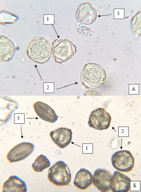 Microslides of pollen