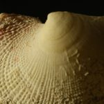 Multifocus – shell_17