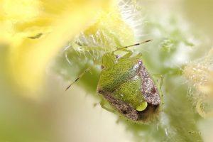 Multifocus - beetle_result
