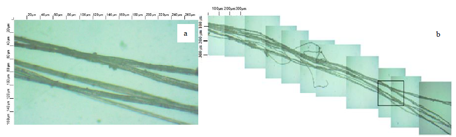 Light microscopy of a flax noil: a – outer appearance of the noil, b – elementary fibers in the noil